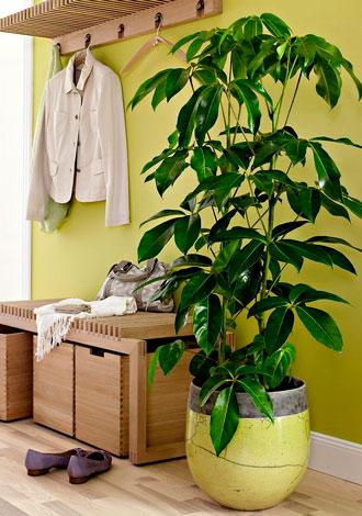 plantas-interior-menos-cuidados-1
