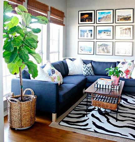 plantas-interior-menos-cuidados-2