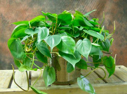 plantas-interior-menos-cuidados-3