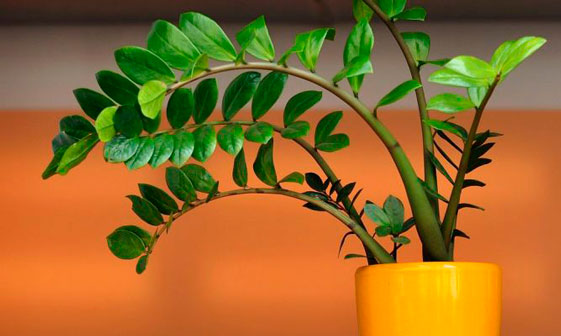 plantas-interior-menos-cuidados-8