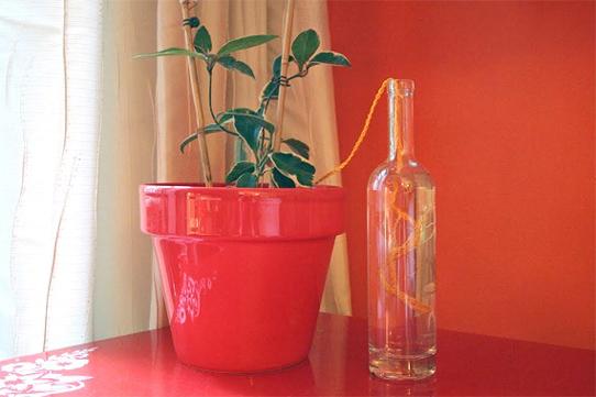 plantas-que-se-riegan-solas-2
